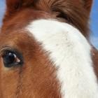 horse-face-139326099592h